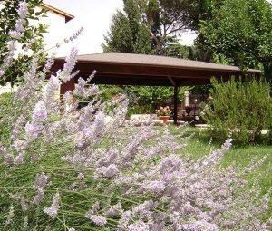 residence il leccio appartamenti vacanze paganico (13)